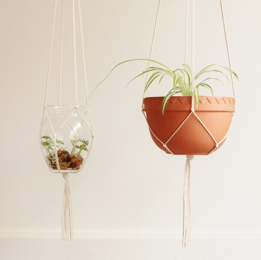 hanging plants | hængende planter